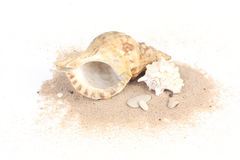Seashells on sand isolated on white bakcground Stock Photography