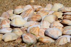 Seashells on the sand. A lot of seashells on the sand stock photo