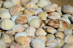 Seashells on the sand. A lot of seashells on the sand stock photography