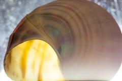 Seashells on Sand Royalty Free Stock Images