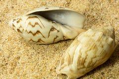 Seashells on Sand Royalty Free Stock Photos