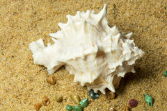 Seashells on Sand Stock Images