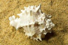 Seashells on Sand Royalty Free Stock Image