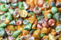 Seashells on Sand Stock Photos