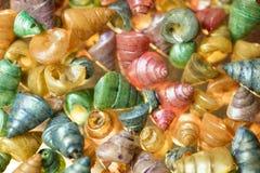 Seashells on Sand Royalty Free Stock Photography
