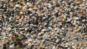 Seashells on the sand. Many different beautiful seashells on the sand stock images