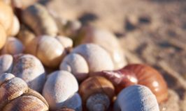Seashells on a sand royalty free stock photography