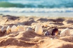 Seashells in the sand. The sea coast with seashells, half in the sand stock photography
