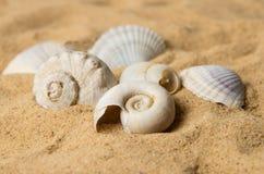 Seashells on sand Stock Photo