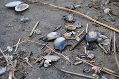 Seashells on the sand. Shells and sticks on the seashore stock photo