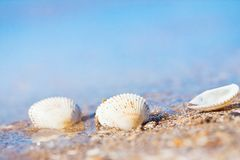 Seashells on a sand shore of Black Sea beach in waves against light blue clear sky. On a sunny summer morning, bright bokeh stock photography