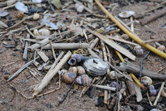 Seashells on the sand. Seashells and sticks on the seashore royalty free stock photography
