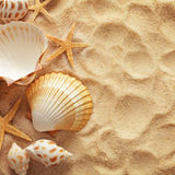 Seashells and sand Royalty Free Stock Image