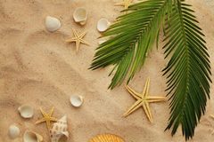 Seashells and sand. Summer background. seashells and palm leaf on sand royalty free stock photos