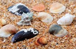 Seashells on sand in sunny day Stock Photo