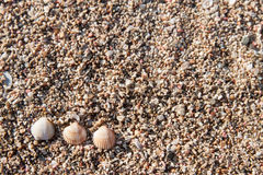 Seashells on sand stock photography