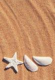 Seashells on the sand Royalty Free Stock Photos