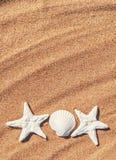 Seashells on the sand Stock Photos