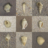 Seashells on Sand. Seashells in various forms, on studio photographed, macro sand textures, showing diversity in nature stock photos