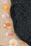 Seashells on the sand and water droplets Stock Photography