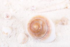 Seashells in the sand for a white holiday background Stock Photo