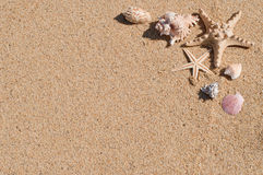 Seashells on the sandy beach Royalty Free Stock Photo