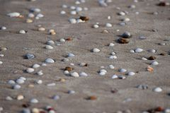 Seashells on Sandy Beach - Abstract Marine Background Royalty Free Stock Photography