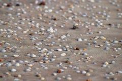 Seashells on Sandy Beach - Abstract Marine Background Stock Photo
