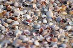 Seashells on Sandy Beach - Abstract Marine Background Royalty Free Stock Photos