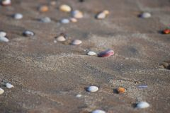 Seashells on Sandy Beach - Abstract Monochrome Marine Background Royalty Free Stock Photo