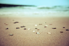 Seashells on the sandy beach blurred summer background Stock Photography