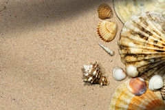 Seashells on a Sandy Beach Stock Images