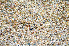 Seashells on a sandy beach in details Stock Photo