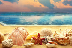 Seashells on the sandy beach Stock Photography