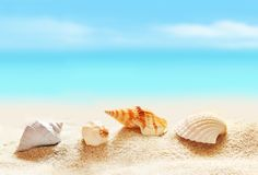 seashells on the sandy beach Stock Photos