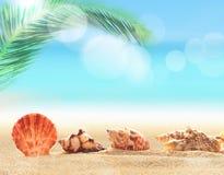 Seashells on the sandy beach Royalty Free Stock Photo