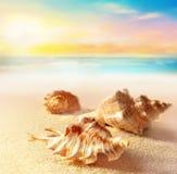 Seashells on the sandy beach Stock Photos