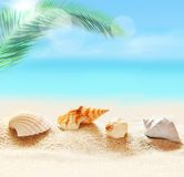 Seashells on the sandy beach and palm Stock Images
