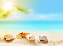 Seashells on the sandy beach and palm Stock Photography