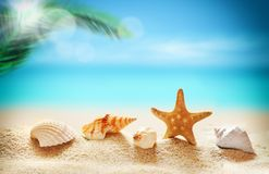Seashells on the sandy beach and palm Royalty Free Stock Photos