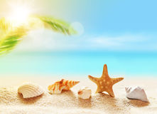 Seashells on the sandy beach and palm Royalty Free Stock Image