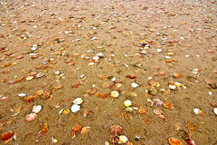 Seashells on sandy beach Stock Photos