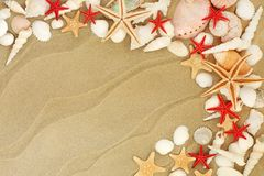 Seashells on a Sandy Beach. Seashell selection including starfish varieties on a sandy beach background with copy space stock photography