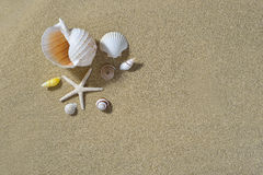 Seashells on the sandy beach Royalty Free Stock Images