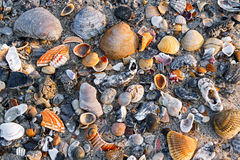 Seashells on Sandy Beach Royalty Free Stock Photography