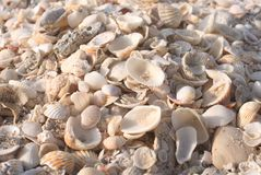 Seashells on a sandy ocean beach royalty free stock images