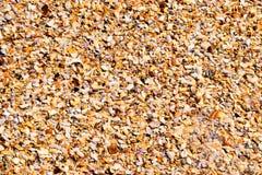 Seashells schiacciati Fotografie Stock