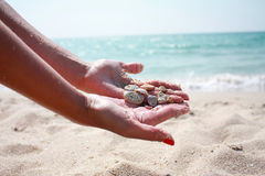 Seashells by the sea. On a bright sunny day Stock Images
