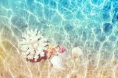 Seashells and sea coral on the summer beach in sea water. Summer background. Summer time. royalty free stock photo