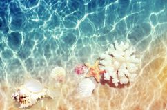 Seashells and sea coral on the summer beach in sea water. Summer background. Summer time. royalty free stock images